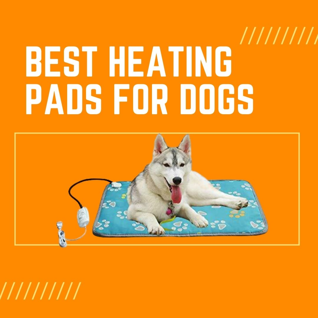best heating pads for dogs with arthritis