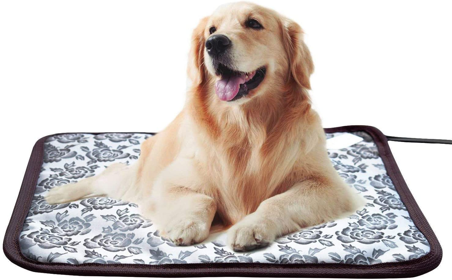 whitney best heating pad for dog with arthritis