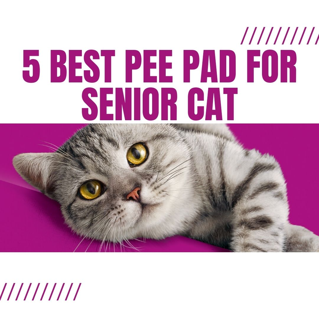 5 best pee pad for senior cats