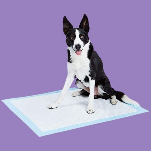best of best pee pads for older dogs extra large